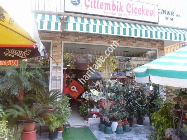 Ankara Çitlembik Çiçek Evi