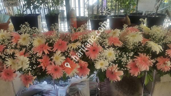 Mutlu Çiçekçilik