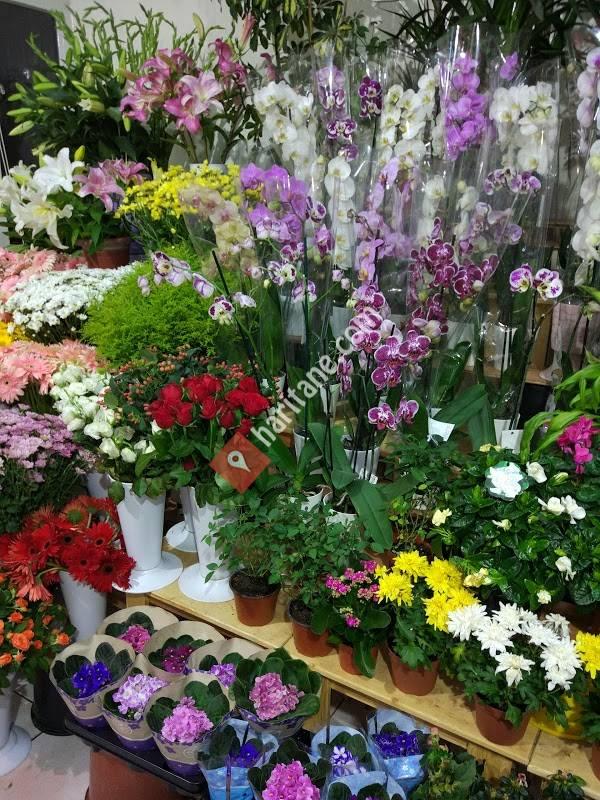 Polen Çiçekçilik